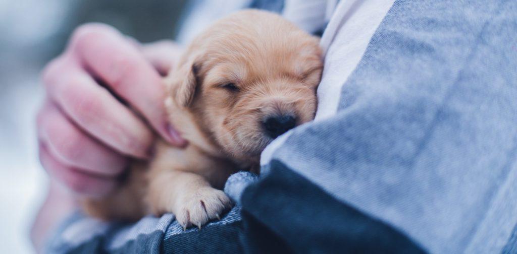 cachorro-promocion-pack