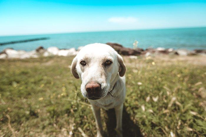 consejos-verano-perros