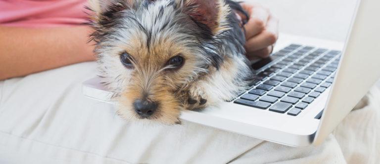 gos sobre portàtil