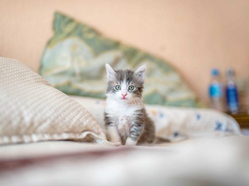 cachorro-promocion-pack-gato