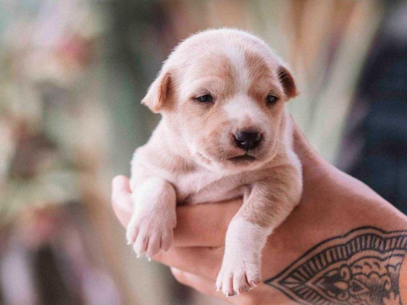 cachorro-promocion-pack-perro