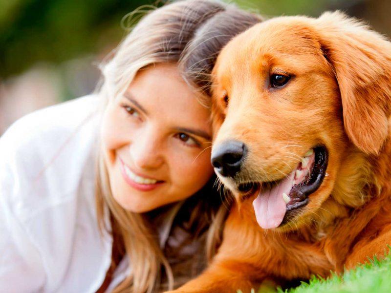 esterilizacion-perra