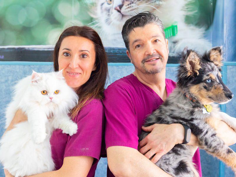 veterinaris d'EVET amb gat i gos